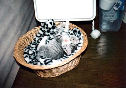 こぶ子猫3
